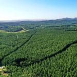 塞罕壩造林事業、1本の苗から世界最大の人工林へ